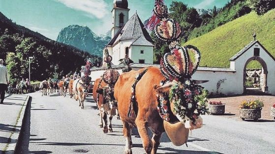"Fröhliche Pfingsten/Whitsun  For most rural areas in Germany Whitsunday was the day when for the first time that year the livestock would be taken out to pasture. The first or the last animal would be decorated with a wreath of flowers and was the ""Pfingstochse"" (the Whitsunday Ox)."