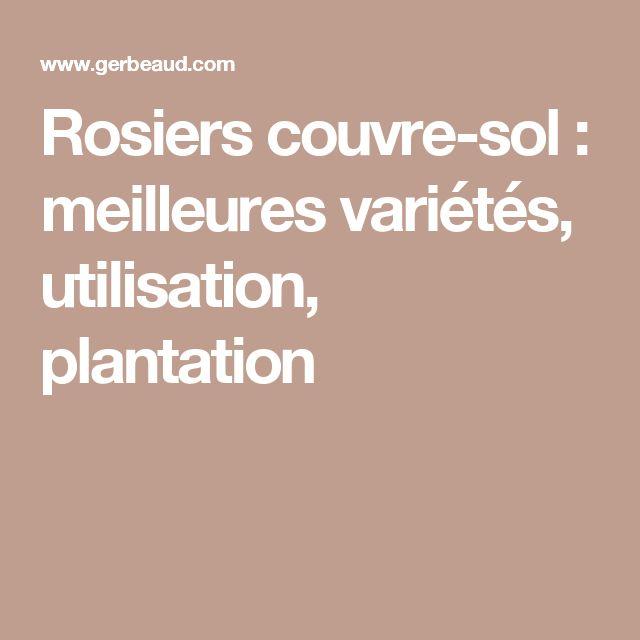 Rosiers couvre-sol : meilleures variétés, utilisation, plantation