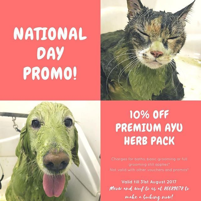 NATIONAL DAY PROMO! ❤️ We know you love the #AYUHerbPack so we are offering a 10% OFF promo throughout the whole month of August! 🌿 For any enquiries or bookings, just meow and woof to us at 86689078! See you pawry soon! 😋 - #いぬ #グループ #犬 #grooming #groomingsg #poodle #toypoodle  #グルーマー #プードル #dogoftheday #dogsofinstagram #dogs #ペット #igsg #petsg #sgpets #sgdogs #singaporedogs #teampawlour #thepawloursg #猫 #ねこ #愛猫 #catoftheday #catsg #sgpets #petsg #igsg #ゴールデンレトリーバー #金毛猎犬#catsofinstagram…