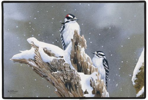 71 Best Images About Birds Found In Colorado On Pinterest