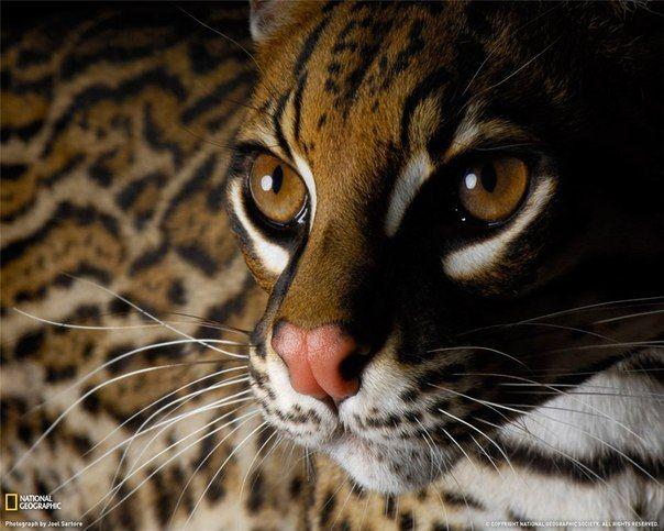 самые красивые картинки животных - Поиск в Google