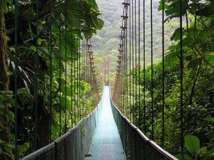 Suspension Bridge in the Cloud Forest of Monteverde, Costa Rica