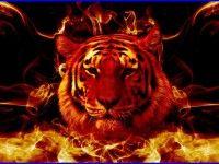 Tiger Fire Wallpaper 4621 Free HD