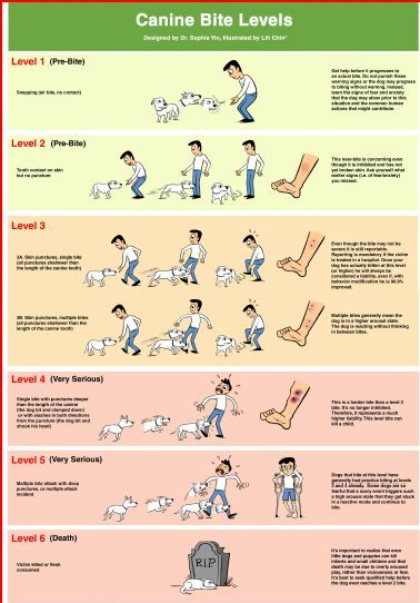 "How many of us have heard someone say ""my dog just bit out of nowhere!"" ? The fact is, most dogs will often give many, many warnings prior to an actual bite. Familiarizing ourselves with our dog's body language is the first step in helping to prevent a bite, but we should also be aware of the different levels of bite thresholds, and NOT ignore situations where our dog ends up ""snapping"" and ""lunging"" - for these are just precursors."