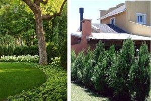 Las 25 mejores ideas sobre plantas para cercos en for Arbustos para patios
