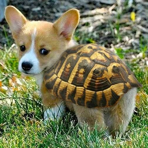 PetsLady's Pick: Cute Turtle Pup Of The Day ... see more at PetsLady.com ... The FUN site for Animal Lovers