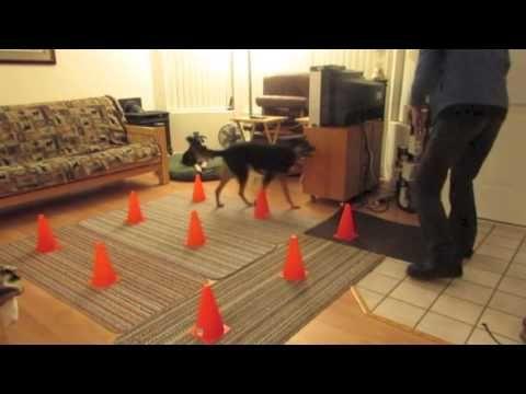 Stir Crazy: Games for Small Spaces class through Fenzi Dog Sports Academy