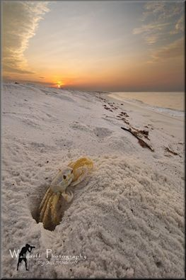 how to catch crabs on the beach in florida