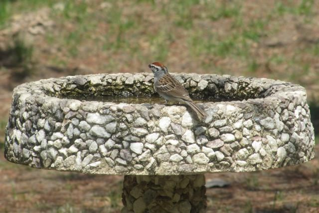 Is a Concrete Bird Bath Best for You?