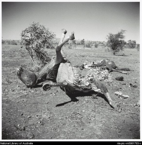 Nolan, Sidney, Sir, 1917-1992. Two horse carcasses, Queensland, 1952, 1 [picture]