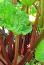Cook rhubarb and vinegar over medium heat for 20 mins. Add remaining ingredients & simmer, stirring occasionally, for 1 hour. Pour into hot sterilized jars, seal immediately. Makes approx. 6x400g jars