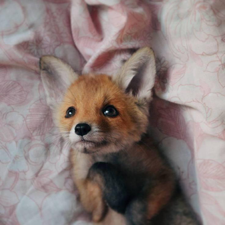 Important Sunny the Fox