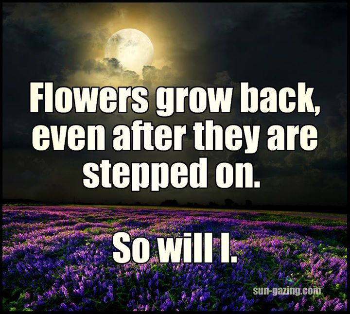 Flowers grow back, even after they are stepped on. So will ...