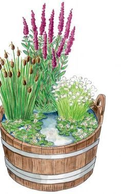 Natürlicher Mini-Teich:Die Kombination aus Holzbottich und Pflanzen mit…