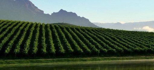 Stellenbosch Kloof crowned South Africa`s finest winegrowing area