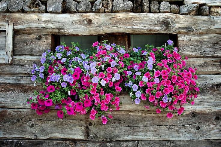 ένας κήπος με λουλούδια.....