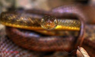 Passion for nature, wildlife, Photography.: This guy was in our Mango tree in the back yard. ...