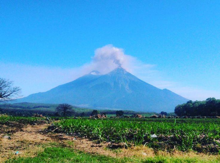 Curious one by josejose_7 #landscape #contratahotel (o) http://ift.tt/1VaJQin de Fuego en acción! #GUATEMALA # #QuePeladoGuate #Volcan #Naturaleza #Paisajes #MiGuate #VolcanDeFuego
