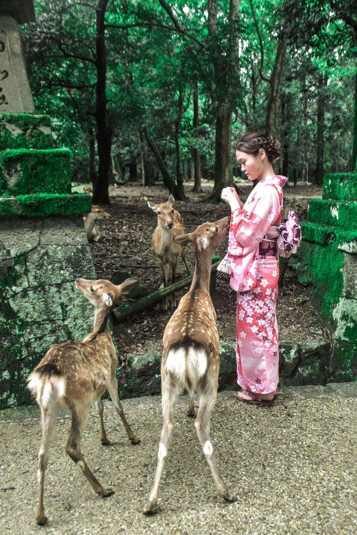 Deer feeding in Nara.