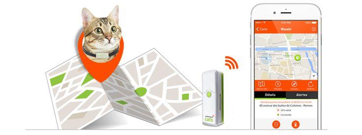 Weenect Cats : après le GPS pour chien, voici le modèle pour chat