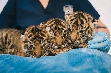 The 37 Cutest Baby Animal Photos Of 2014