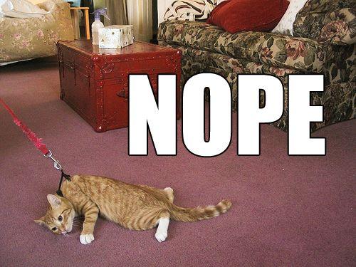 : Cats, Laughing, Dogs, Nope, Walks, Mondays Mornings, So True, Funny Stuff, Cat Walk