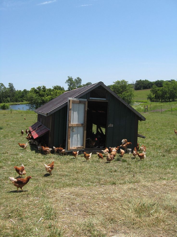 731 best chicken coops images on pinterest for Maintenance free chicken coop