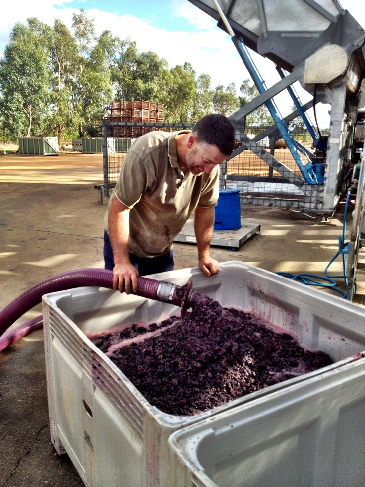 Our Winemaker Justin examining our 2013 Dolcetto with excited eyes