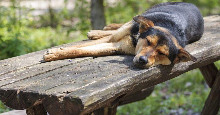 Por que os cães ficam enjoados toda manhã?. Existem dois motivos principais pelos quais um cachorro vomitaria toda manhã após uma longa noite de sono ou um período de jejum. O primeiro é uma gravidez, mas isso geralmente passa depois que os filhotes nascem. O segundo é a síndrome do vômito bilioso, também conhecida como refluxo biliar, que pode acontecer com ambos os sexos, todas as raças e ...