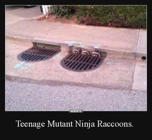 Teenage Mutant Ninja Raccoons.   Lustige Bilder, Sprüche, Witze, echt lustig