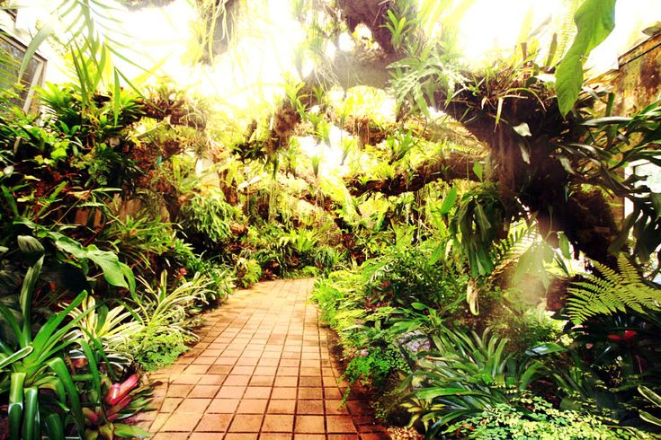 Fairchild Tropical Botanic Garden Miami Fl Photo