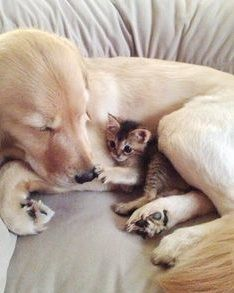 Pet Picture Of The Day