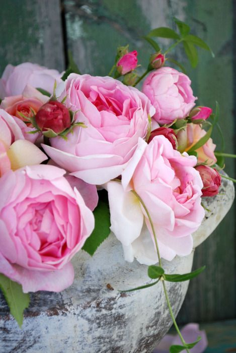 Cabbage roses.