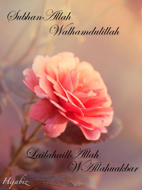 hijabiz:    Wet your tongue with remembrance of Allah  Dhikr..<3