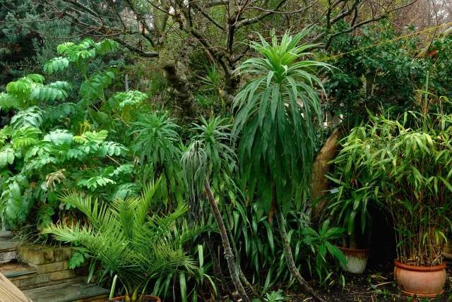 17 Best Images About Tropical Look In Zone 6 7 On