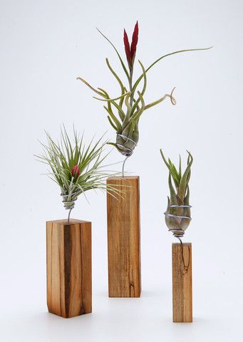 Airplantman brings you the 'AirplantVessel' tabletop accent in handcrafted wood. Each one includes both a hand wired airplant and perfectly matched vessel selected from the best of our changing variet