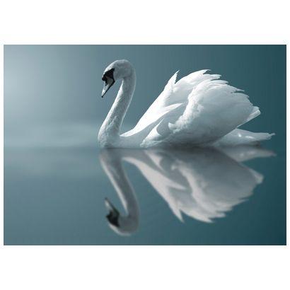 Swan #postcards