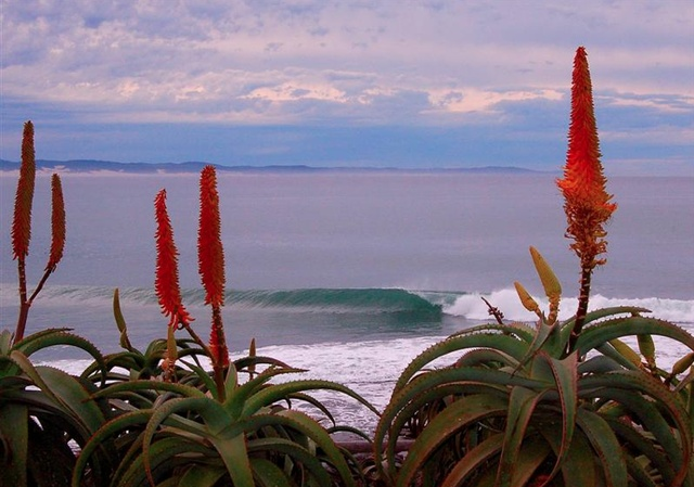Kwazulu Natal South Coast. It is believed that when the aloes bloom, the sardine run is about to start!