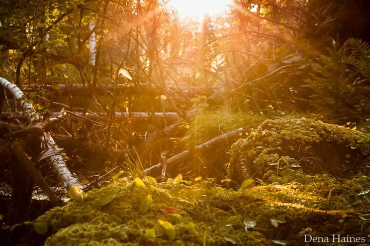 How to Photograph Sun Flares: 14 Tips for Beginners | Digital Photography School | Bloglovin'