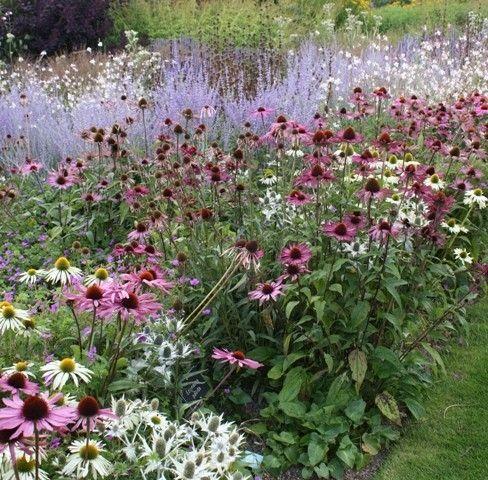 Echinacea, white & purple, Eryngium, Perovskia and Moilinia by helen