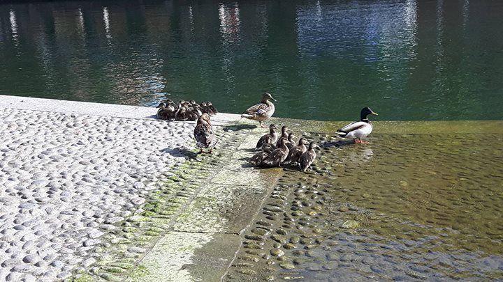 """""""Ragazze???"""" """"Sìììììì????"""" """"E' l'ora del bagnetto tutte in acqua!"""" (foto di Fabiola Ticozzelli) #milanodavedere Milano da Vedere"""