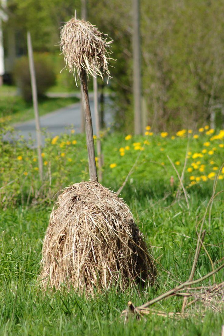 Edellisen kesän heinät seipäässä Teurolla.