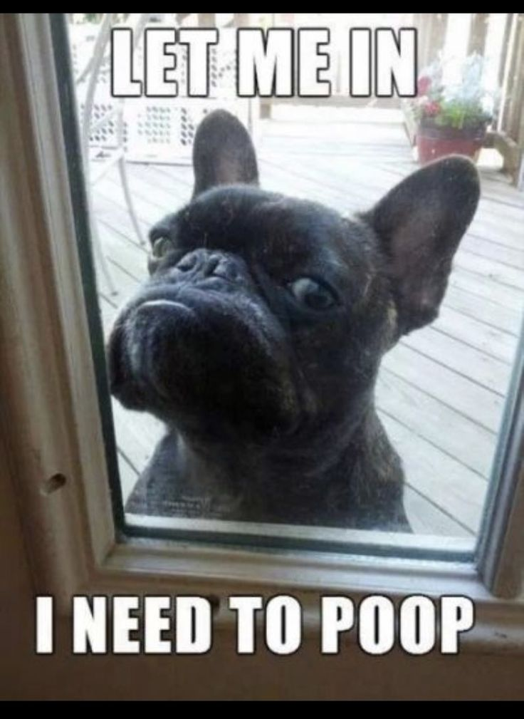 9 Funniest French Bulldog Memes - What The Frenchie