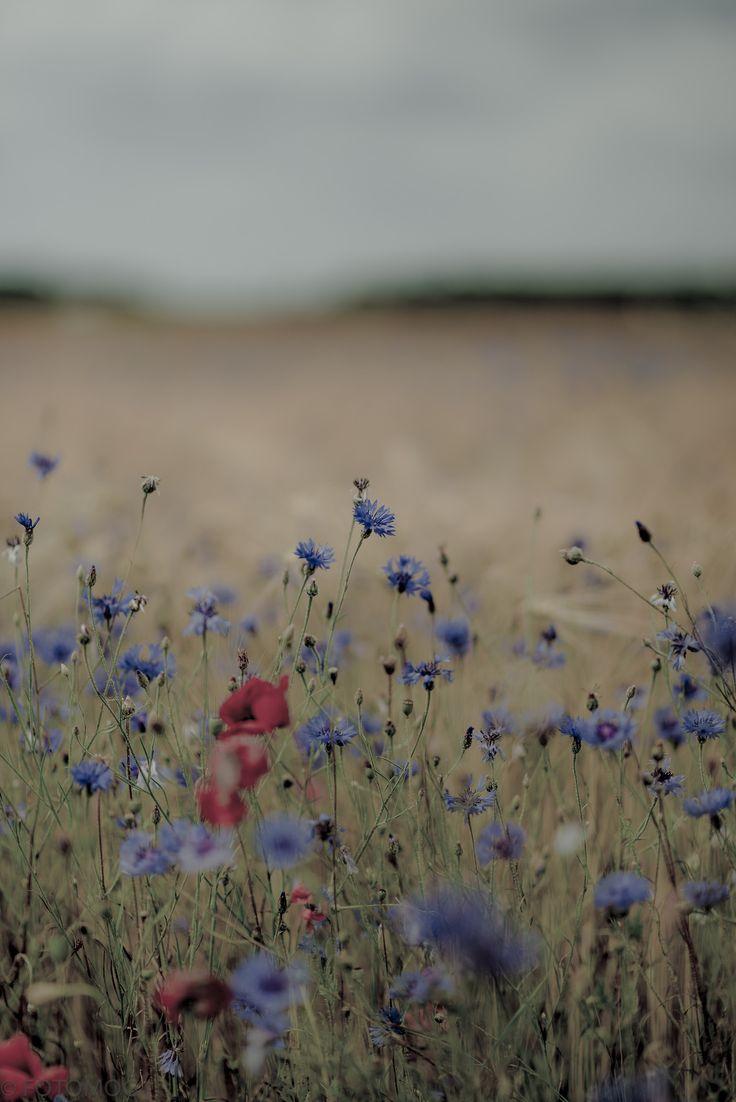 Inspiration: Soft edges; neutral, indistinct background; semi-impressionistic, slightly sparse flowers