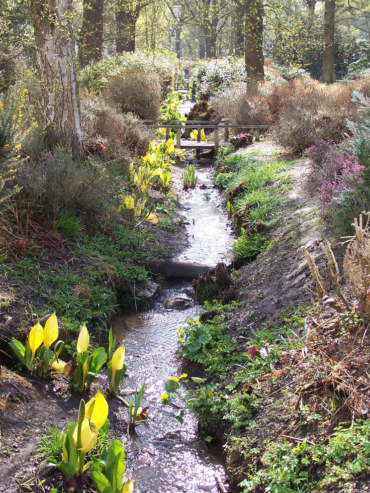 Isabella plantation, Richmond park, early spring