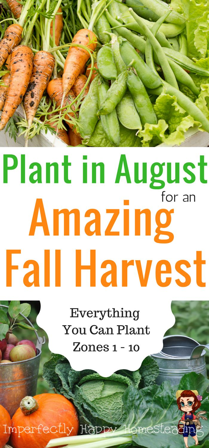 Everything You Can Plant in August for an Amazing Fall Harvest from Your Ve able Garden Zone 9 and 10 included
