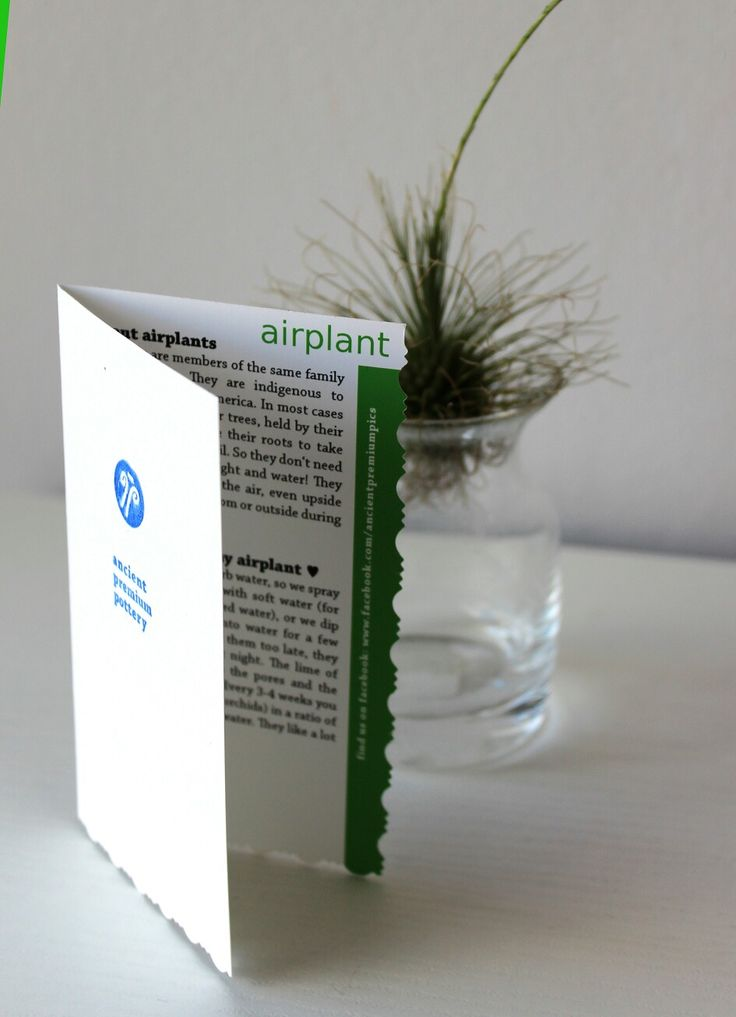 Our leaflet about airplants. It goes with each #airplant you order