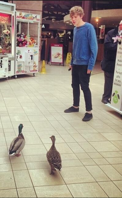 Remember when Ashton got attacked by ducks? :)<<<<< WHERE CAN I FIND THIS VIDEO?!?!!?!?!?!?!?!??!??? SOMEONE PLEASE TELL MEEEE!!!