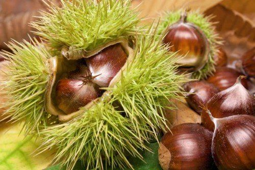 25. Chestnuts - 25 Foods You Can Re-Grow Yourself from Kitchen Scraps~ Growing chestnuts is really easy, provided you choose a type of chestnut that is indigenous to your planting zone. Remember to dry the nuts out well before planting and note that you may have to wait a few years before your trees really begin bearing nuts. You will also need to plant more than one chestnut tree for cross pollination or you won't get much from them.