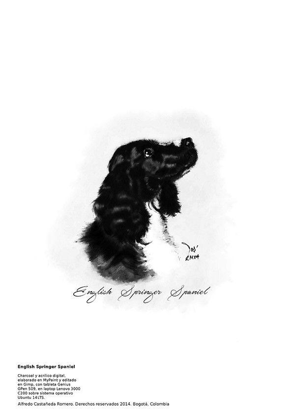 English Springer Spaniel on Behance  #english #springer #spaniel #dog #illustration